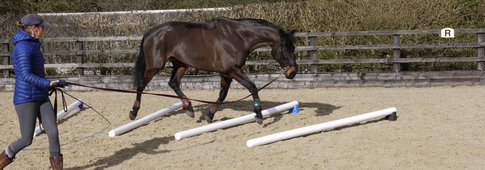 Best Raised Polework for lungeing